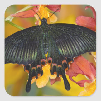 Sammamish, Washington Tropical Butterfly 42 Square Sticker