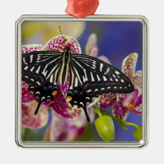 Sammamish, Washington Tropical Butterfly 43 Christmas Ornament