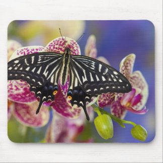 Sammamish, Washington Tropical Butterfly 43 Mouse Mat