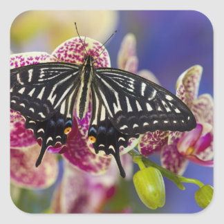Sammamish, Washington Tropical Butterfly 43 Square Sticker