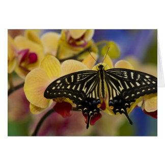 Sammamish, Washington Tropical Butterfly 44 Card