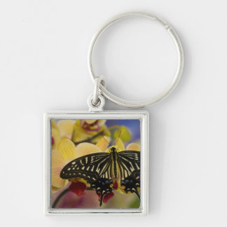 Sammamish, Washington Tropical Butterfly 44 Key Ring
