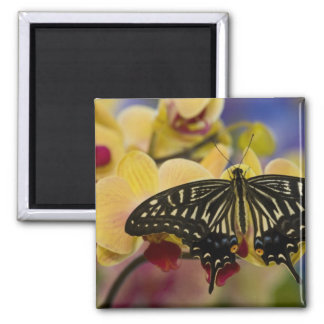 Sammamish, Washington Tropical Butterfly 44 Magnet