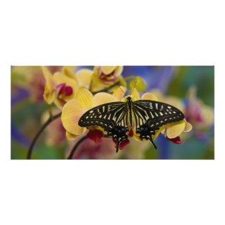Sammamish, Washington Tropical Butterfly 44 Photo Print