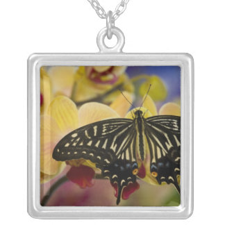 Sammamish, Washington Tropical Butterfly 44 Square Pendant Necklace