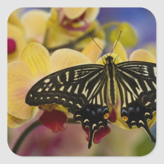 Sammamish, Washington Tropical Butterfly 44 Square Sticker