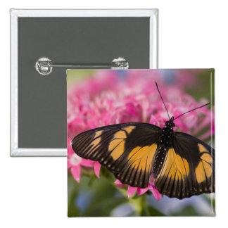 Sammamish, Washington Tropical Butterfly 4 Buttons