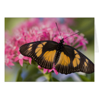 Sammamish, Washington Tropical Butterfly 4 Card