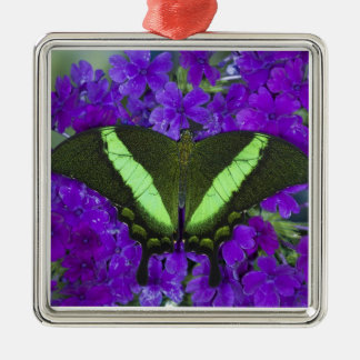 Sammamish, Washington Tropical Butterfly 4 Christmas Ornament