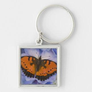 Sammamish Washington Tropical Butterfly 4 Key Ring