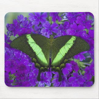 Sammamish, Washington Tropical Butterfly 4 Mouse Mat