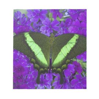Sammamish, Washington Tropical Butterfly 4 Notepad