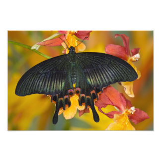 Sammamish, Washington Tropical Butterfly 4 Photo Print