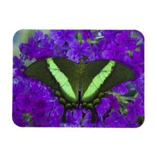 Sammamish, Washington Tropical Butterfly 4 Rectangular Photo Magnet