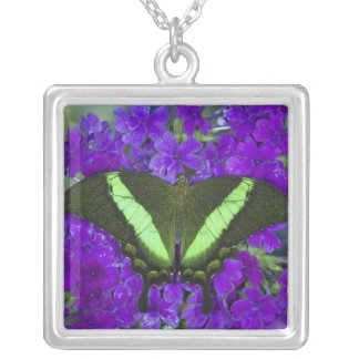 Sammamish, Washington Tropical Butterfly 4 Square Pendant Necklace