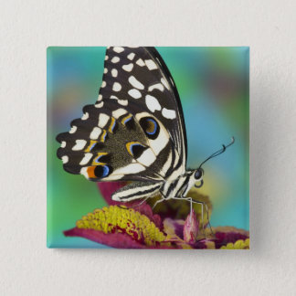 Sammamish, Washington Tropical Butterfly 5 15 Cm Square Badge