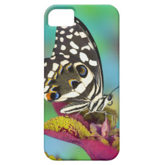 Sammamish, Washington Tropical Butterfly 5 Barely There iPhone 5 Case