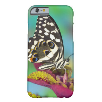 Sammamish, Washington Tropical Butterfly 5 Barely There iPhone 6 Case