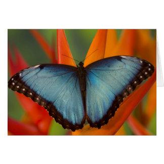 Sammamish Washington Tropical Butterfly 5 Card