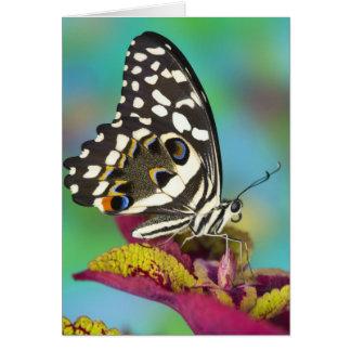 Sammamish, Washington Tropical Butterfly 5 Card
