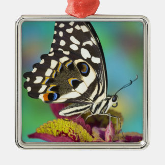 Sammamish, Washington Tropical Butterfly 5 Christmas Ornament