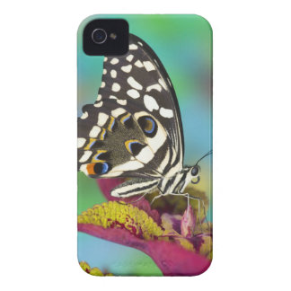 Sammamish, Washington Tropical Butterfly 5 iPhone 4 Cases