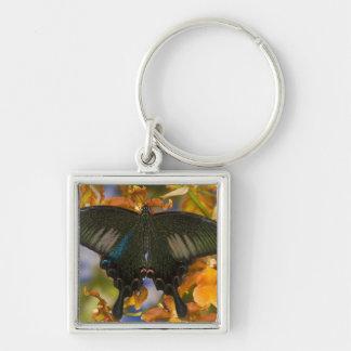 Sammamish, Washington Tropical Butterfly 5 Key Ring