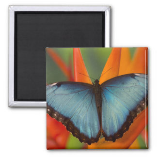 Sammamish Washington Tropical Butterfly 5 Magnet