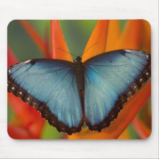 Sammamish Washington Tropical Butterfly 5 Mouse Mat