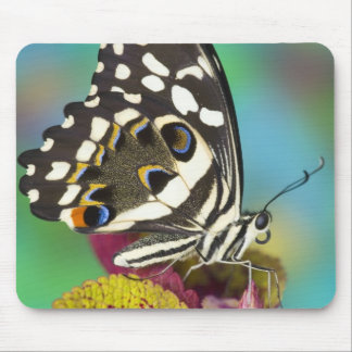 Sammamish, Washington Tropical Butterfly 5 Mouse Mat