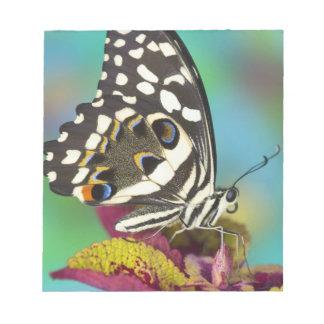 Sammamish, Washington Tropical Butterfly 5 Notepad