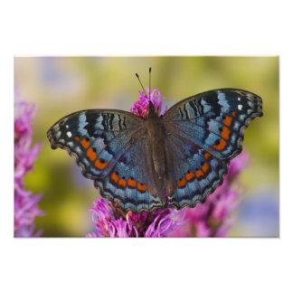 Sammamish Washington Tropical Butterfly 5 Photo Print
