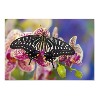 Sammamish, Washington Tropical Butterfly 5 Photo Print