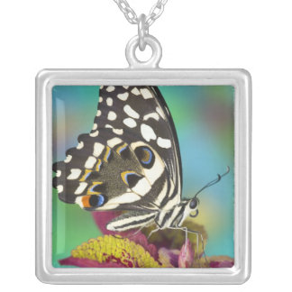 Sammamish, Washington Tropical Butterfly 5 Silver Plated Necklace