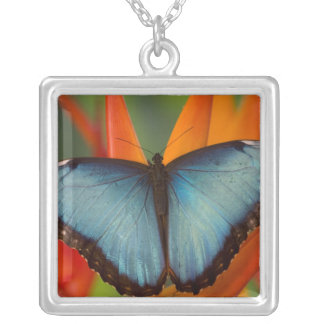 Sammamish Washington Tropical Butterfly 5 Square Pendant Necklace