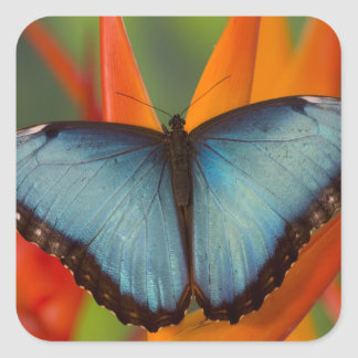 Sammamish Washington Tropical Butterfly 5 Square Sticker