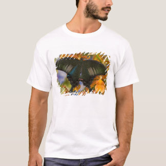 Sammamish, Washington Tropical Butterfly 5 T-Shirt