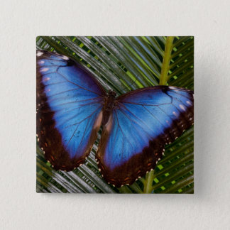 Sammamish Washington Tropical Butterfly 6 15 Cm Square Badge