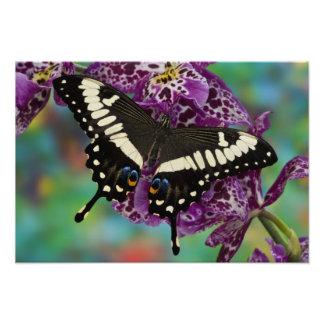 Sammamish, Washington Tropical Butterfly 6 Art Photo