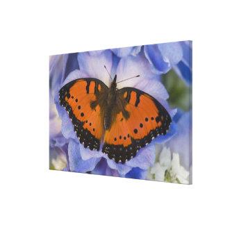 Sammamish Washington Tropical Butterfly 6 Canvas Print