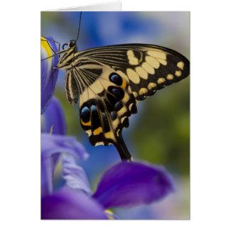 Sammamish, Washington Tropical Butterfly 6 Card