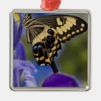 Sammamish, Washington Tropical Butterfly 6 Christmas Ornament