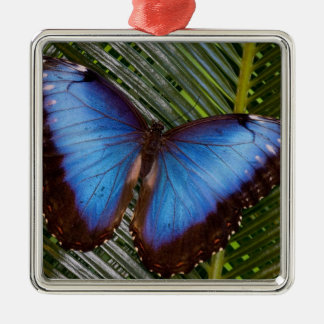Sammamish Washington Tropical Butterfly 6 Christmas Ornament