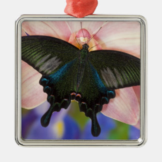 Sammamish, Washington Tropical Butterfly 6 Christmas Ornament