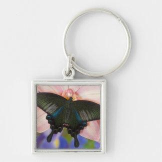 Sammamish, Washington Tropical Butterfly 6 Key Ring