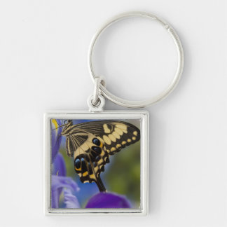 Sammamish, Washington Tropical Butterfly 6 Key Ring