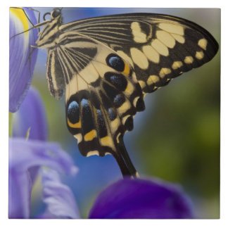 Sammamish, Washington Tropical Butterfly 6 Large Square Tile