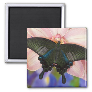 Sammamish, Washington Tropical Butterfly 6 Magnet