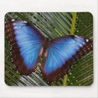 Sammamish Washington Tropical Butterfly 6 Mouse Mat