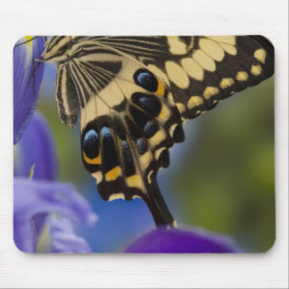 Sammamish, Washington Tropical Butterfly 6 Mouse Mat
